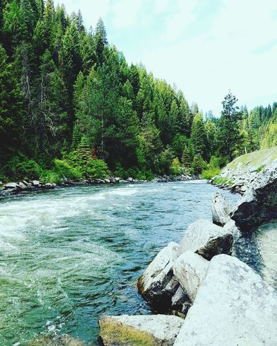 Tree Water Scenics Tranquil Scene Tranquility Flowing Nature River Beauty In Nature Sky Growth Day Green Color Flowing Water Outdoors Remote Riverbank Adventure Is Out There Idaho Idahome Idahoexplored Idahophotographer Nature Photography Exploringidaho Adventures