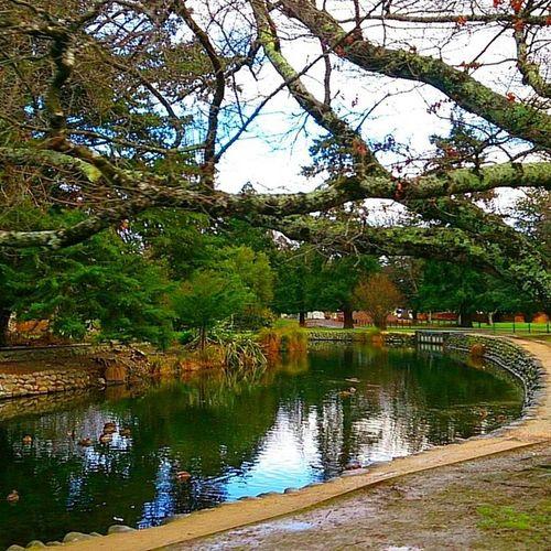 DuckPark  Scenery Lake Trees nature