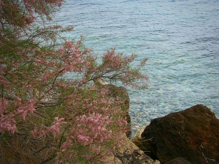 Tamarisk Tree Sea Water Nature No People Outdoors Beauty In Nature Close-up Blooming Blossom Red Red Blossom Shades Of Blue Blue Sea Seascape Landscape Rocks Rocky Beach Beach Blue Red And Blue Tree And Sea Backgrounds Growth The Great Outdoors - 2017 EyeEm Awards