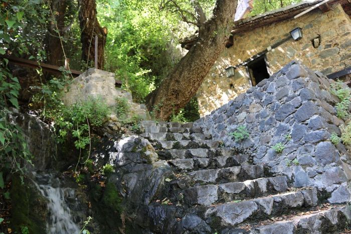 Old Mill House Mill Stone Stair Tree Pathway Nature Bath Kakopetria Cyprus Troodos Forest Path Forest Trees Forestwalk Forest Photography Forest Walk Forest Forest View Forestphotography Forest Plants Trees Green Color Rock Stairs Rock Structure Building House Houses