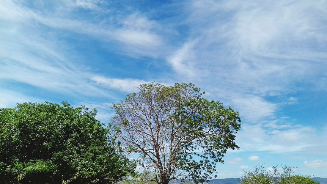 Tree Sky Low Angle View Nature Growth No People Tranquility Cloud - Sky Beauty In Nature Summer Day Outdoors Brazil