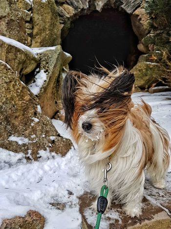 So ein Wind! Kalt ist der auch noch!!! Shades of Winter Dog Snow Day Nature Winter Outdoors Cold Temperature High Angle View