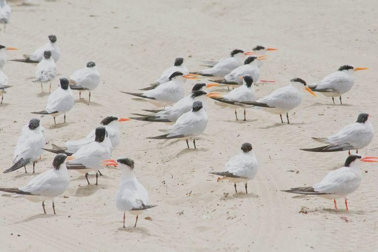 High angle view of birds on santa cruz beach
