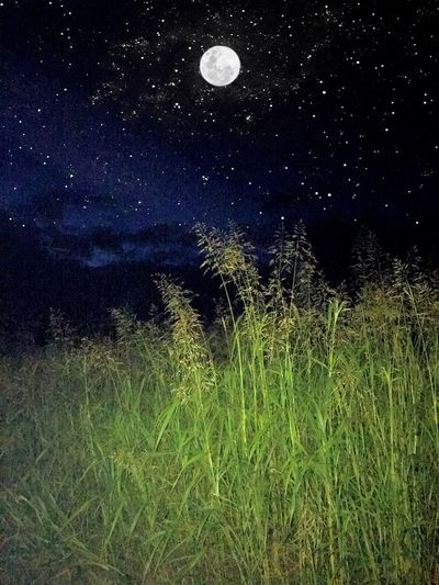 Sky Clouds And Sky Colorful Moon Moonlight Stars Wheat Green Beautiful