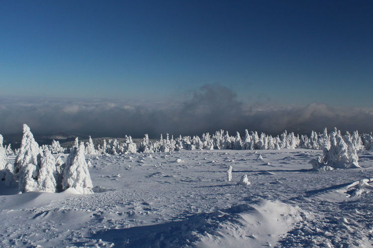winter impressions of Nationalpark Harz Cold Temperature Snow Winter Nature Harz Brocken Trees Barks Of A Tree Sky Landscape Tranquil Scene Tranquility Scenics - Nature Environment No People Beauty In Nature Blue Day Land Frozen White Color Cloud - Sky Non-urban Scene Ice Snowcapped Mountain