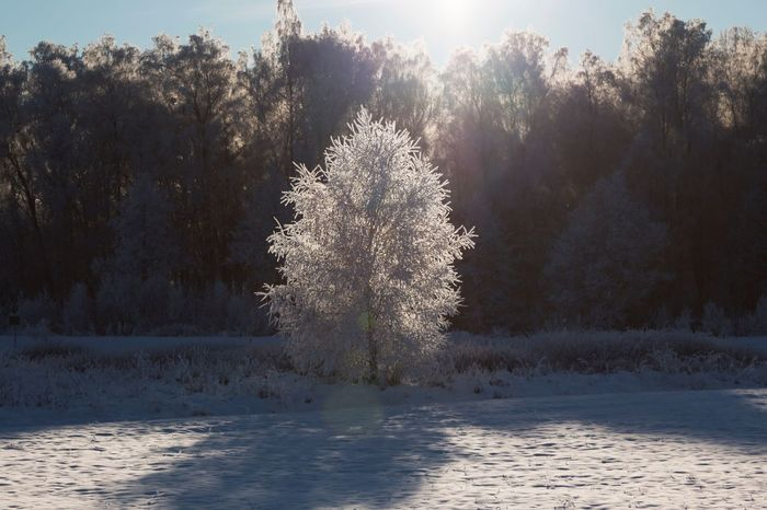 Enlightened - Tree Snow Winter Cold Temperature Nature Beauty In Nature Landscape Scenics Frozen Branch Tranquil Scene Simple Beauty Frosty Tree The Week Of Eyeem EyeEm Masterclass Hello World Exceptional Photographs Outdoors Frosty Tranquility Sunlight Enlight Sunbeam Idyllic My Year My View