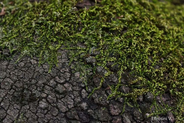 Moss Close-up Nature Green Color Beauty In Nature Freshness No People Forest Trees Growth Cracked Wood