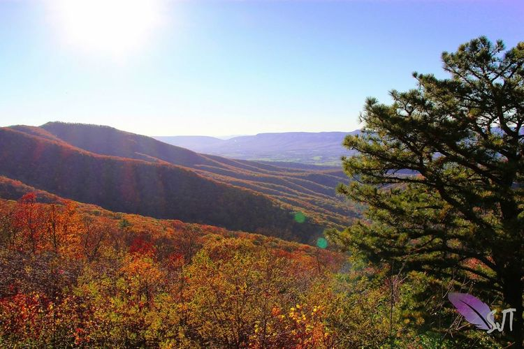Off of Skyline Dr., Shenandoah National Park. Nature EyeEm Nature Lover Autumn Colors Fall Colors