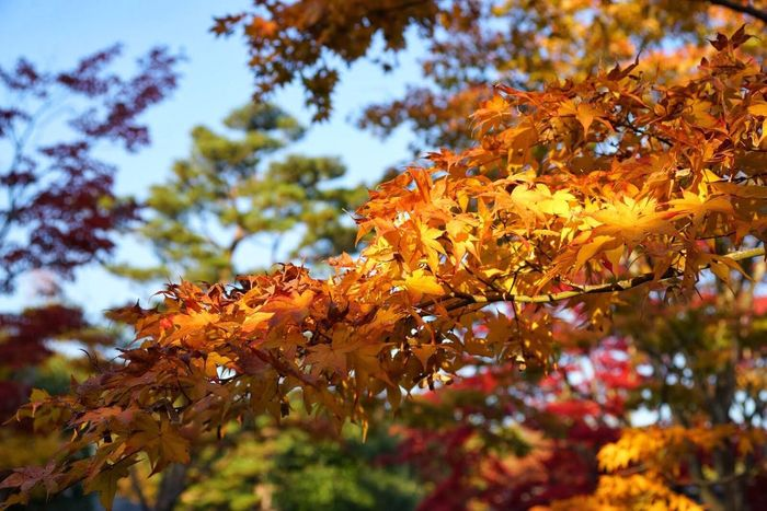 Autumn Colors Yellow Yellow Leaves EyeEm Nature Lover Depth Of Field