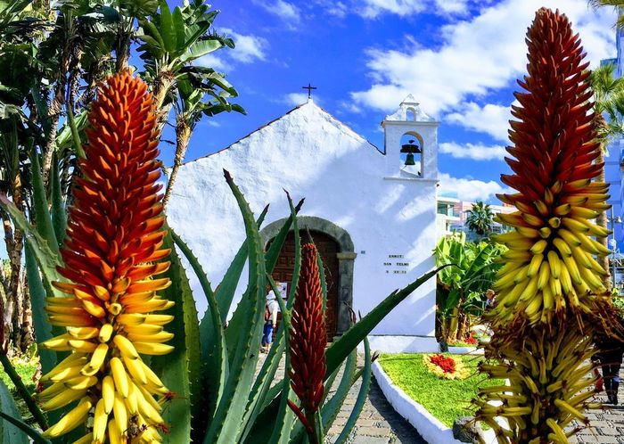 Buitifull Tenerife Church Palm Tree Low Angle View No People Day Flower Beauty In Nature First Eyeem Photo