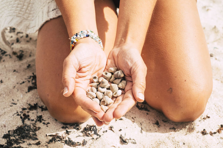 Cropped Image Of Woman Holding Seashells While Kneeling At Beach