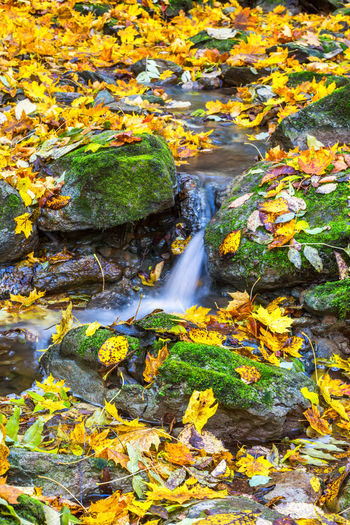 Scenic view of stream flowing amidst rocks during autumn