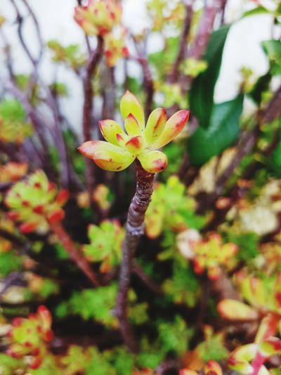 Flower Nature Fragility Plant Growth Beauty In Nature Petal Flower Head Day Close-up No People Outdoors Springtime Leaf Freshness