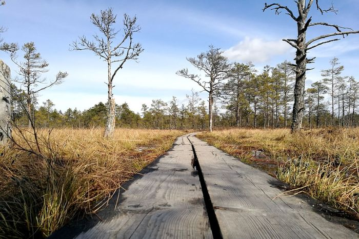 The Way Forward Viru Bog Outdoors Swamp Sunny Weather Outdoor Activity Estonian Nature Water And Moss Bog Leisure Activity