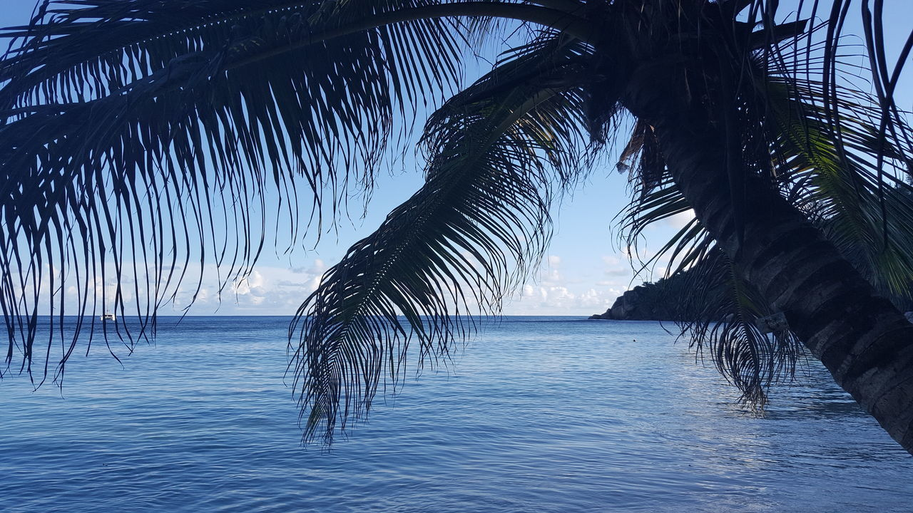 sea, water, palm tree, tranquil scene, beauty in nature, nature, tranquility, no people, scenics, beach, tree, horizon over water, outdoors, day, sky