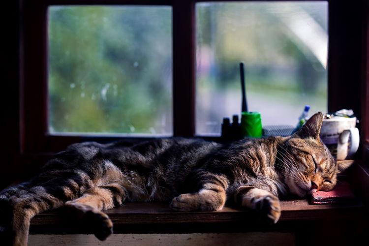 Sleeping Cute
