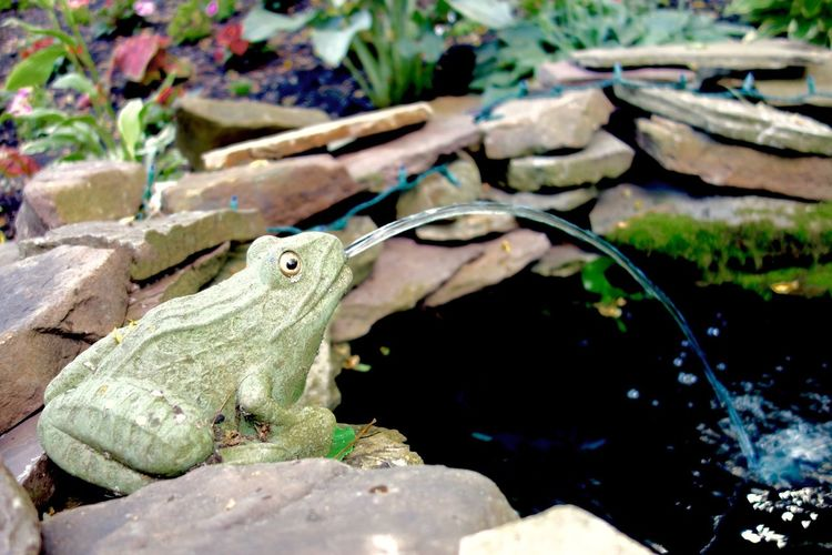My frog fountain. Frog Fountain Pond Koi Pond Patio Statue Water Stone Stones Stones & Water Relaxing Relaxation Outdoors Yard Myquietplace Sanctuary  My Sanctuary Serenity Serenity In Nature Marylandisforcrabs🦀 Breathing Space