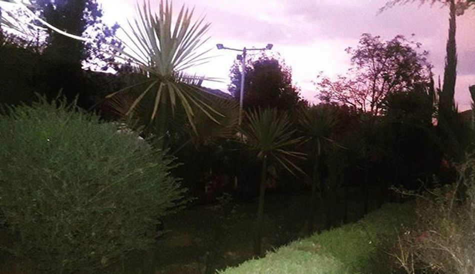 Look at the sky Twilight Atardecer Ocaso Plant Beautifulview Pinkclouds Nubes Nubesrosadas Hermoso Naturelover Nature Naturaleza en La Paz, Bolivia