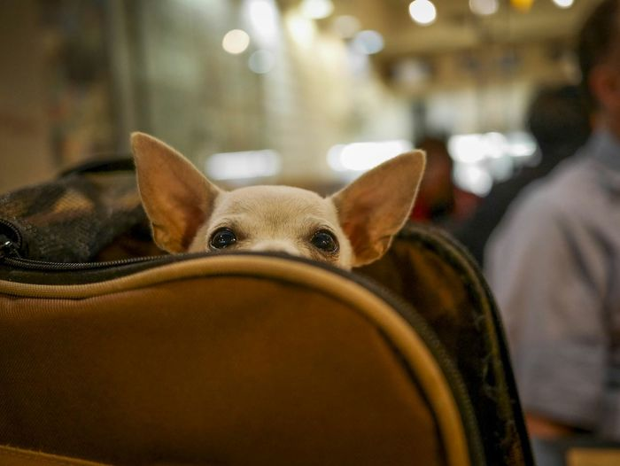 Portrait of dog in luggage at airport