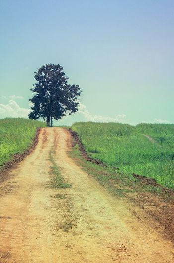 Dirt road passing through grassy field