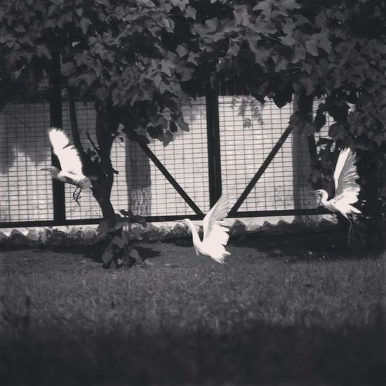 Bird Birdlove Birdporn Nature black white filter instaclick instalove picoftheday vatsphotography likeforlike :)