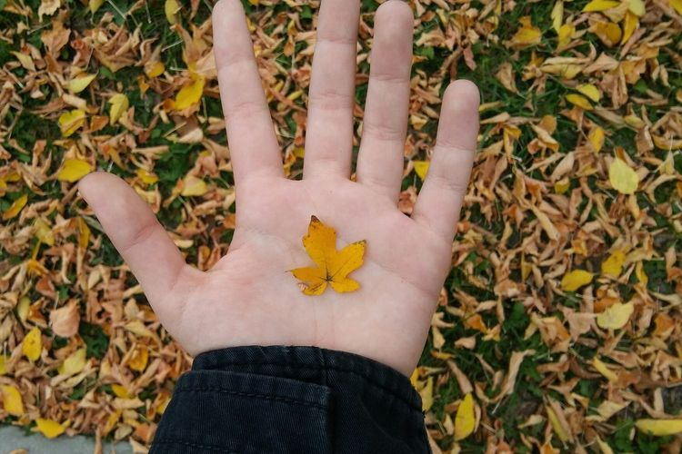 High angle view of person hand on autumn leaves