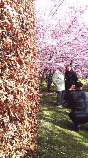 Gärten Der Welt Marzahn Park Garden Cherry Blossoms Kirschblüten  Family Portrait