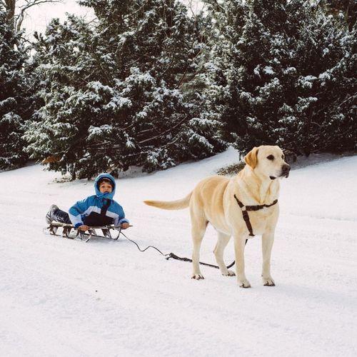 Dog Sledding Sleddog Snow snow