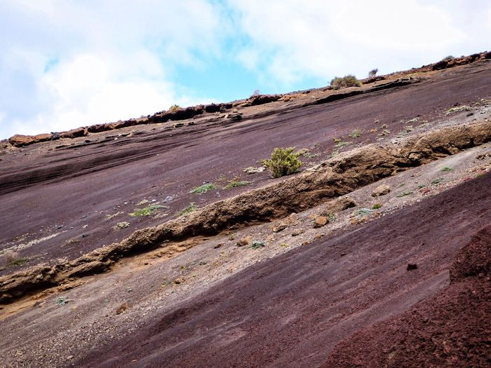 The KIOMI Collection Hot Earth Lanzarote Landscape Landscape_Collection Landscape_photography EyeEm Nature Lover Eye4photography  Hugging A Tree Nature Photography No Edit/no Filter Enjoying The View from Islas Canarias The Great Outdoors - 2016 EyeEm Awards
