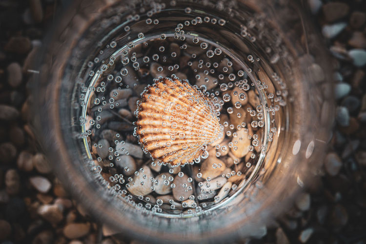 Directly above shot of seashell in jar