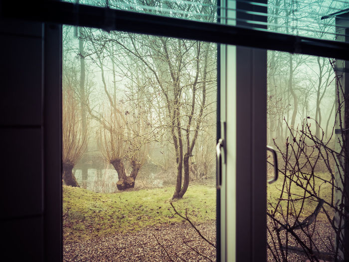 Room with a View I From My Window Misty Room Architecture Bare Tree Building Exterior Built Structure Day Foggy Foggy Morning Misty Morning Mystical Mystisch Nature No People Outdoors Sky Tree Window