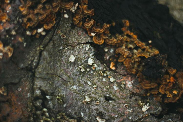 Macro Wood Texture Nature Tree