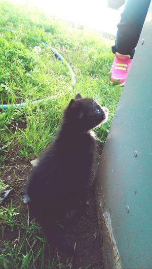 Silly kitten Kitten #adorable Kitty!  Here Kitty Kitty First Eyeem Photo