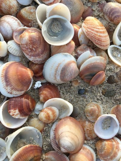 High angle view of shells in sea