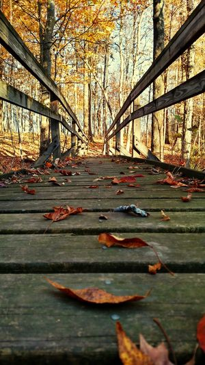 Outdoors Bridge Nature No People Leaf Forestry Industry Beauty In Nature Wood - Material Beauty Tranquility Scenics Wooden Texture Wooden Bridge