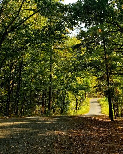 I Love Green! Tree Nature Beauty In Nature Outdoors Tranquility No People Scenics Forest Photography Tree-lined Road Country Roads Take Me Home Country Road Green Green Green!  Green Nature Green Leaves Quaint Perspective Quaint Strolls Quaint Place Peaceful Peaceful And Serene Peaceful Place Woods Introspective Moment Walk