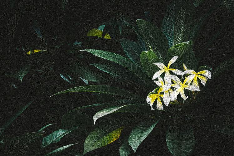 Plumeria with