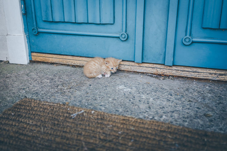 Kitten In Front Of Door