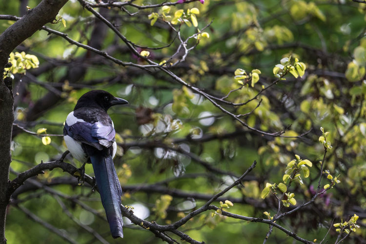 Bird on a tree Animals In The Wild Animal Wildlife Bird Vertebrate Animal Themes Tree One Animal Animal Plant Perching Branch Focus On Foreground Day No People Nature Growth Beauty In Nature Outdoors Green Color Black Color