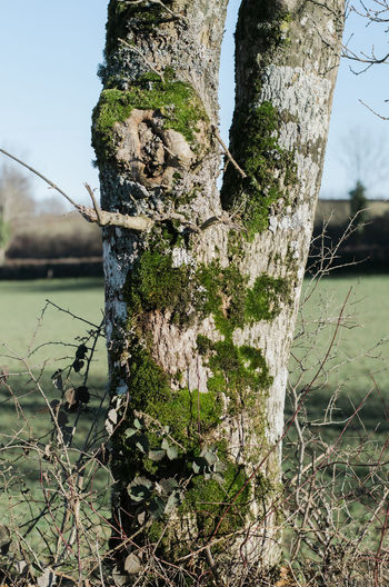 Out and about in the French countryside. Beauty In Nature Branch Close-up Day Dead Tree Focus On Foreground Grass Growth Nature No People Outdoors Sky Tree Tree Trunk