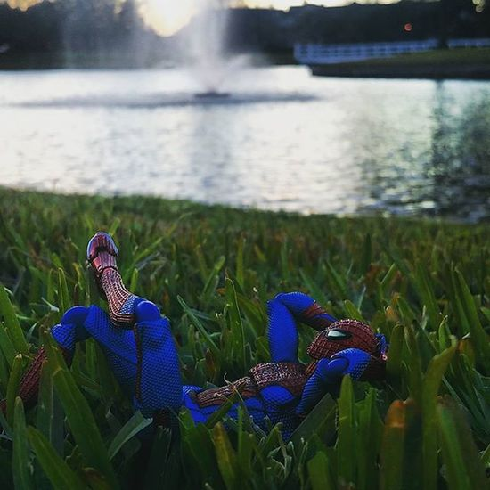 Some days Spidey loves to escape from swinging across the tall buildings of the city and lay in the grass by the lake. Day 8 Fwebruary Wallcrawler Spiderman