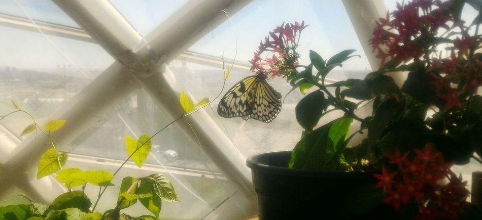Flower Butterfly Kelebek Türkiye Konya Kelebeklervadisi Botany