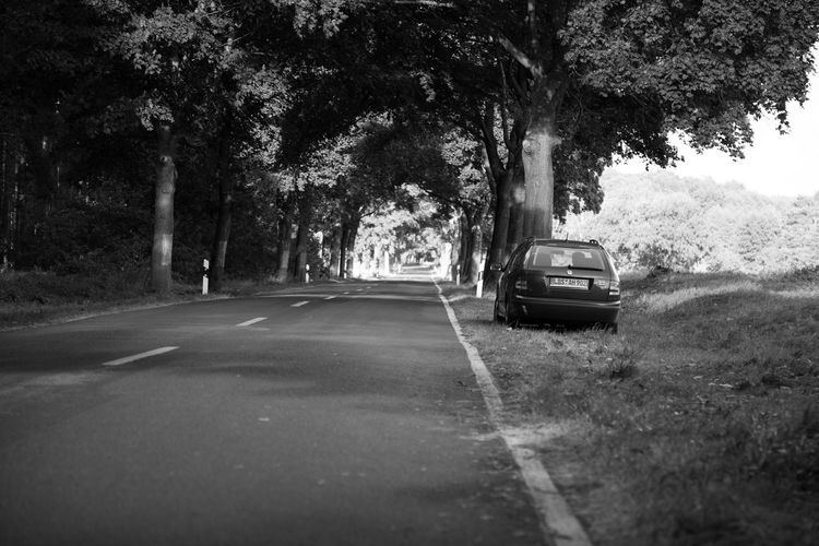 Cars on road against trees in city