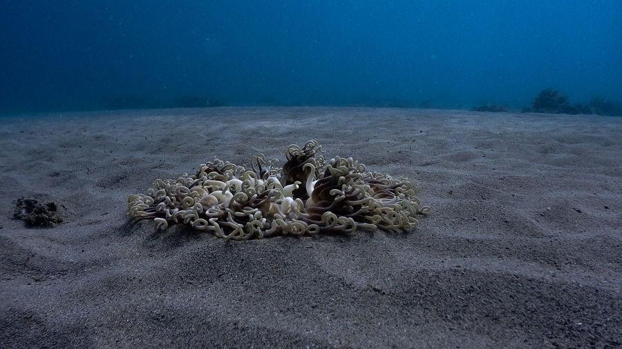 Sandy sea bottom at pagkilatan