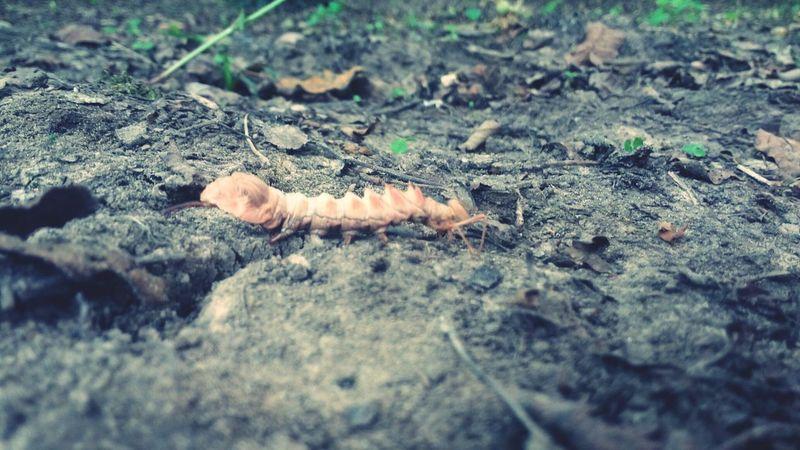 Beetle 🐛Caterpillar🐛