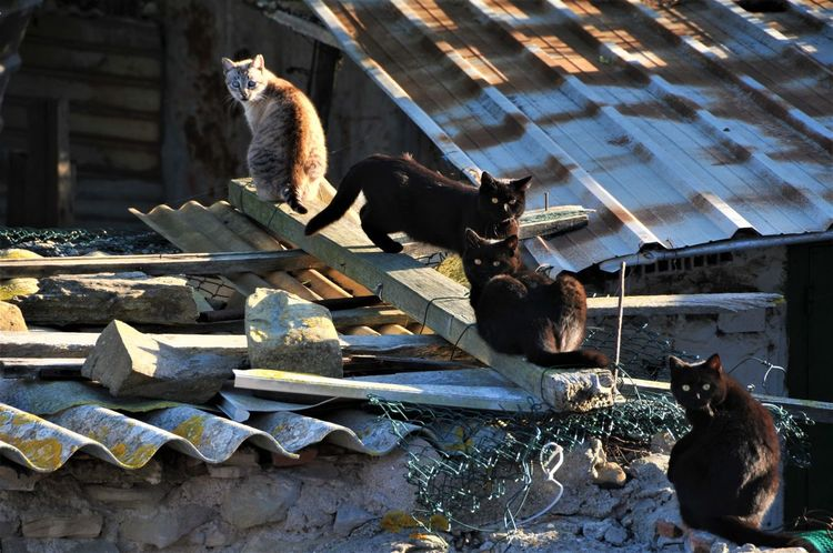Looking At Camera Animal Themes Day Four Cats No People Rooftops Sidelight