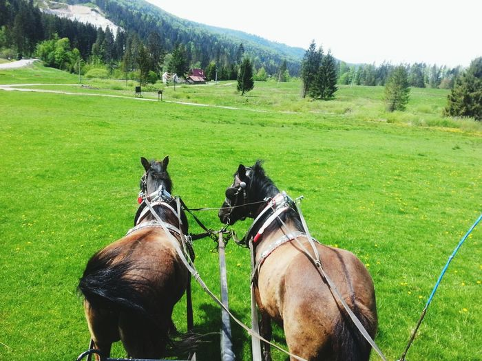Animals Horse Horses Field Nature Green Beautiful Animal Summer Beauty