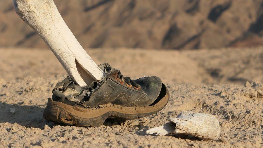 Close-up of human skeleton wearing shoe on rock