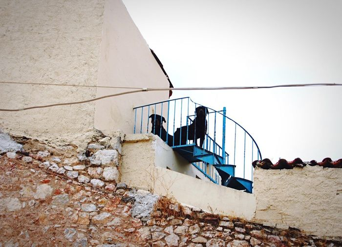 The two guardians. EEA3 EEA3 - Athens Nikon Nikon D40 Dogs OpenEdit Against The Light Silhouette On The Rooftop The Street Photographer - 2015 EyeEm Awards
