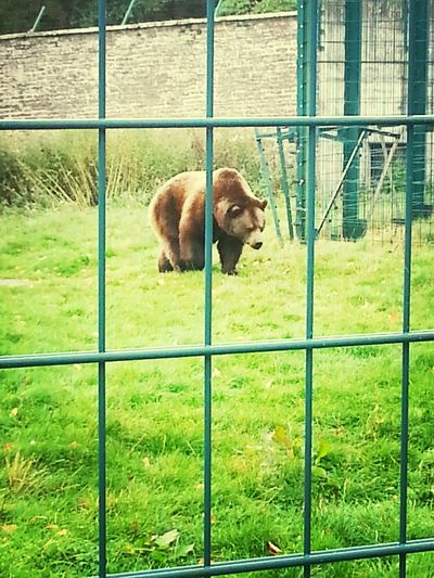 Camperdown Bear Zoo